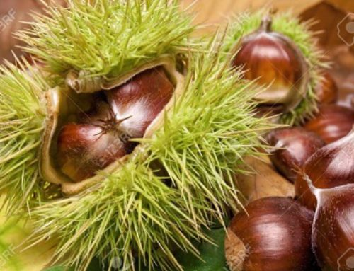 Autumn is Chestnut season
